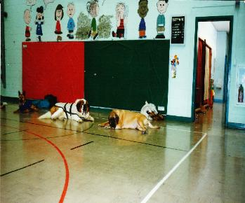 Dog Behavior and training seminars for schools and functions
