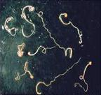 Extracted whip worms